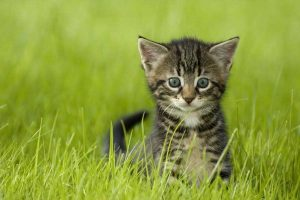 Kitten in grass Frequently Asked Questions header