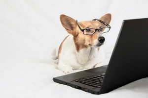 dog at computer fiscal policies
